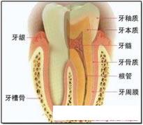 牙龈出现肿痛该怎么办